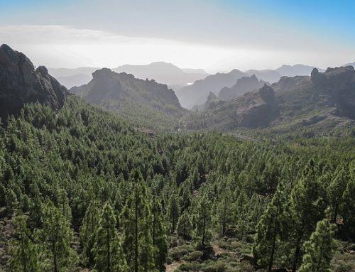 Comprometidos con el medioambiente en Tenerife